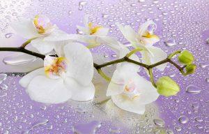 Romantik und Blumen