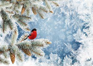 Winterwald weihnachtswald