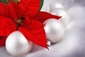 Weihnachtsstern und Kugel